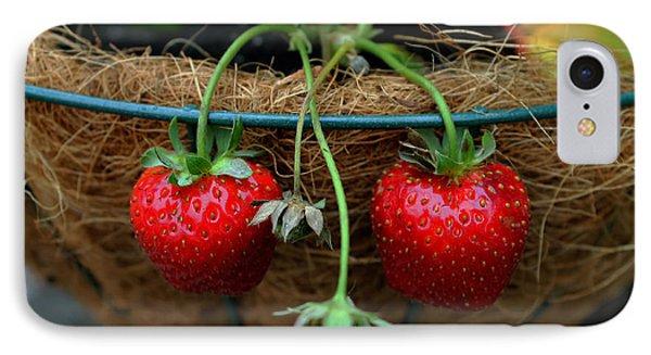 Strawberries IPhone Case by Pamela Walton