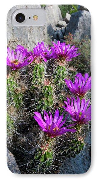 Strawberry Cactus (echinocereus IPhone Case
