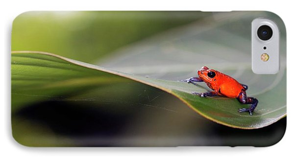 Strawberry Poison Frog IPhone Case by Nicolas Reusens