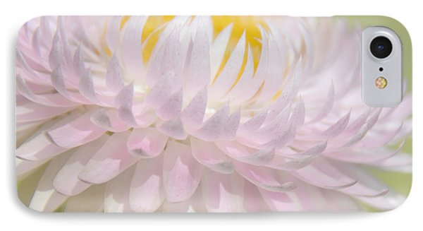 Strawflower In Soft Focus IPhone Case