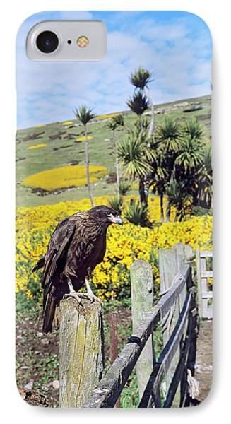 Albatross iPhone 7 Case - Striated Caracara Or Johnny Rook by Martin Zwick
