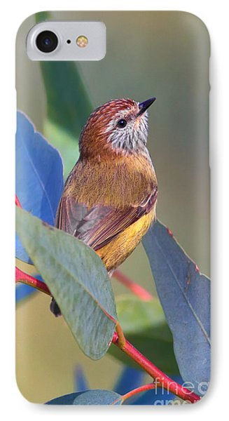Striated Thornbill Phone Case by Bill  Robinson
