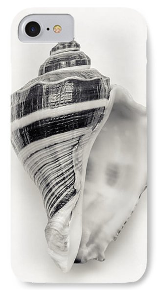 Striped Sea Shell IPhone Case by Lucid Mood