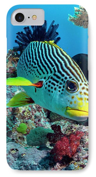 Striped Sweetlips On A Reef IPhone Case by Louise Murray