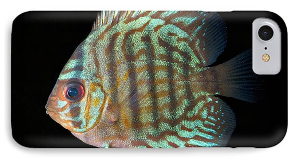 Striped Turquoise Discus IPhone Case by Nigel Downer