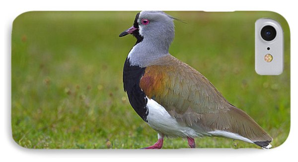 Strutting Lapwing IPhone 7 Case by Tony Beck