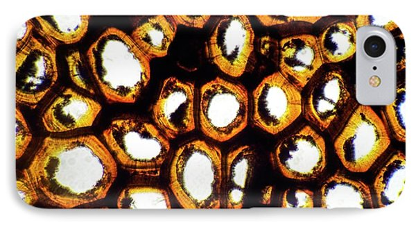 Strychnine Tree Nut IPhone Case by Dr Keith Wheeler