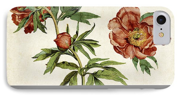 Studies Of Peonies, 1472 IPhone Case by Getty Research Institute