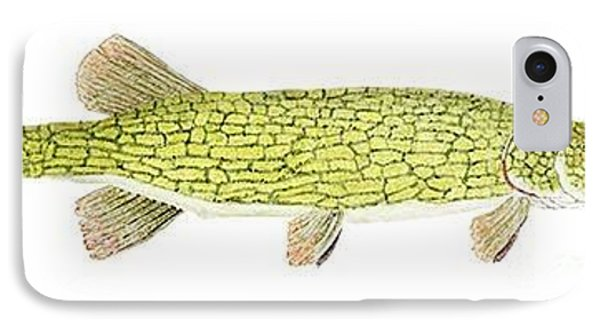 IPhone Case featuring the painting Study Of A Chain Pickerel by Thom Glace