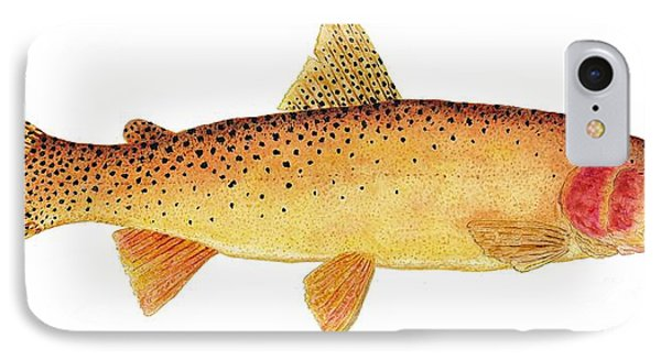 IPhone Case featuring the painting Study Of A Yellowstone Cutthroat Trout by Thom Glace
