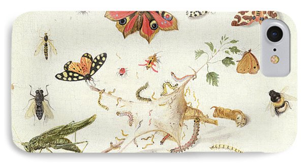 Study Of Insects And Flowers IPhone 7 Case by Ferdinand van Kessel