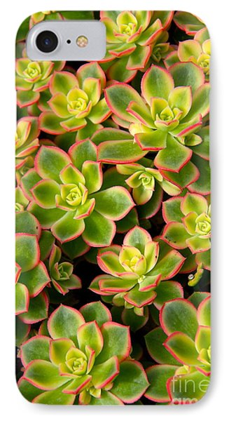 Succulent Glow IPhone Case