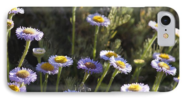 Suisun Marsh Aster In The Morning Light IPhone Case by Artist and Photographer Laura Wrede
