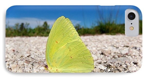 IPhone Case featuring the photograph Sulphur Yellow Butterfly by Chris Mercer