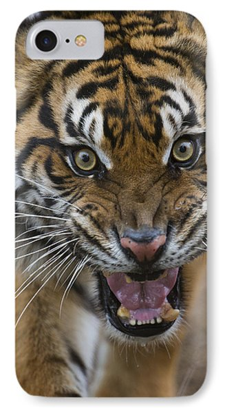 Sumatran Tiger Male Snarling Native IPhone Case by San Diego Zoo