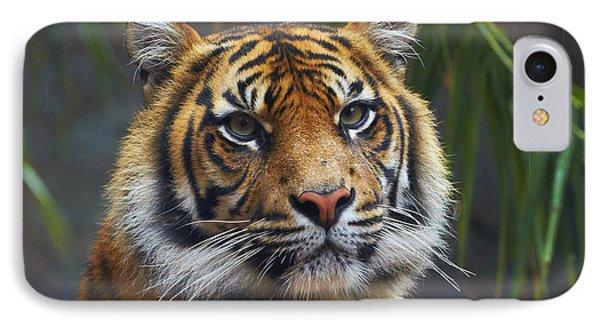 Sumatran Tiger IPhone Case by Martin Willis