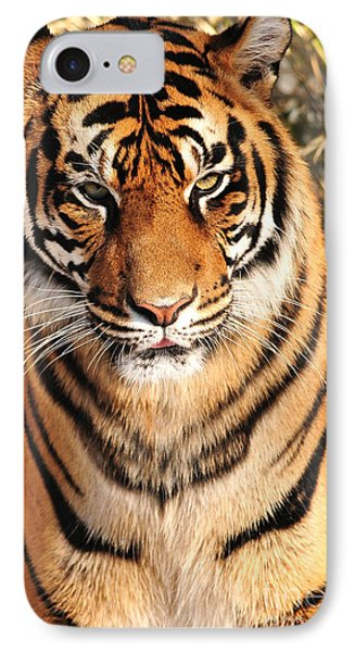 IPhone Case featuring the photograph Sumatran Tiger by Olivia Hardwicke