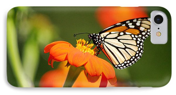 Summer Beauty IPhone Case by Living Color Photography Lorraine Lynch