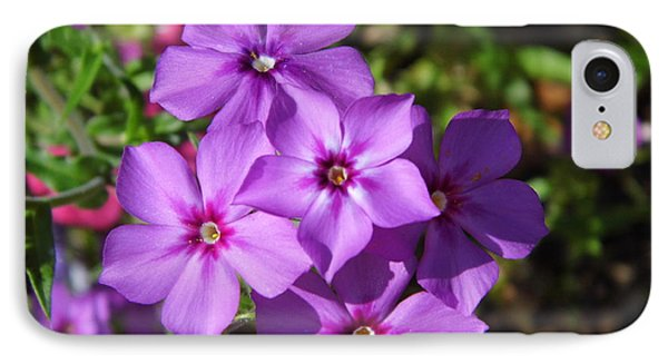 IPhone Case featuring the photograph Summer Purple Phlox by D Hackett