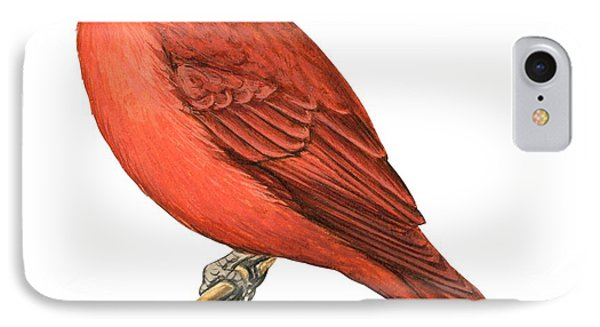 Summer Tanager  IPhone Case by Anonymous
