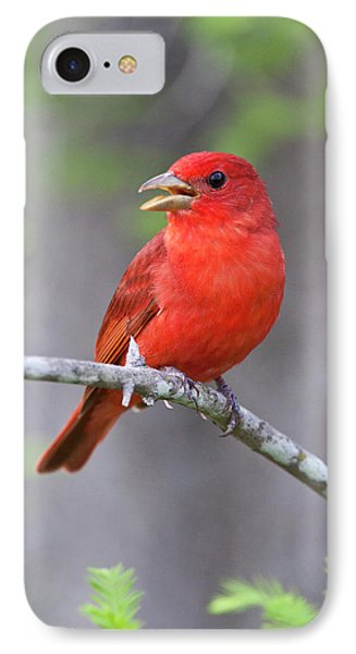 Summer Tanager (piranga Rubra IPhone Case