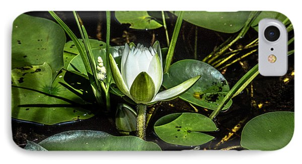 Summer Water Lily 2 IPhone Case by Susan Cole Kelly Impressions