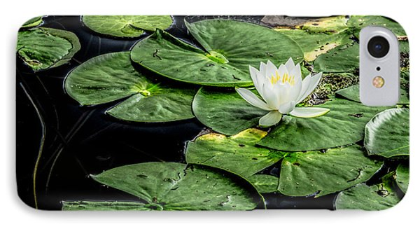 Summer Water Lily 3 IPhone Case by Susan Cole Kelly Impressions