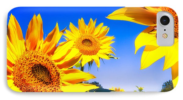 Summertime Sunflowers IPhone Case by Bob Orsillo