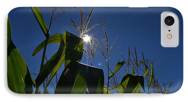 Sun Above The Corn  IPhone Case