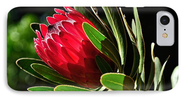 Sun-filled Protea Phone Case by Kaye Menner