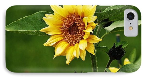 Sun Flower Shines IPhone Case by Al Fritz