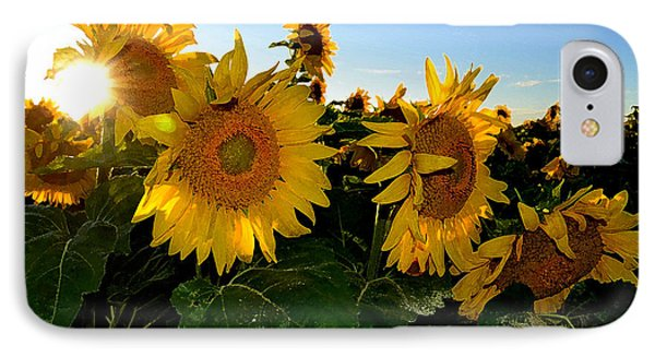 Sun Flowers And Pollen Wcae2  IPhone Case