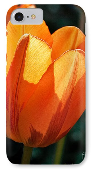 IPhone Case featuring the photograph Sun Kissed Tulip by Barbara McMahon