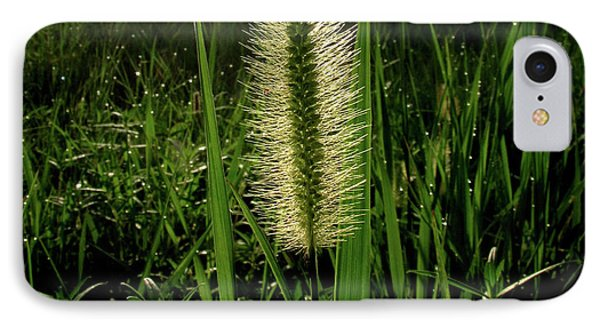 IPhone Case featuring the photograph Sun-lite Grass Seed by Donna Brown