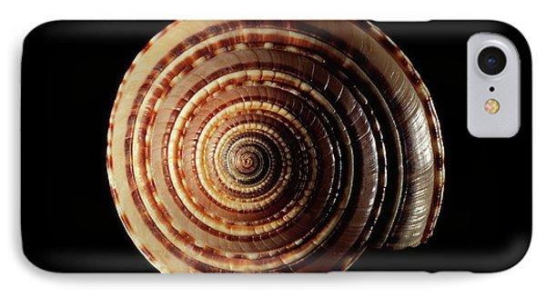 Sundial Sea Snail Shell IPhone Case