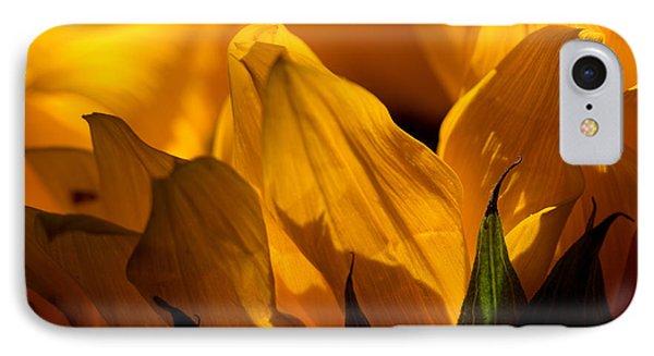Sunflower 14 IPhone Case