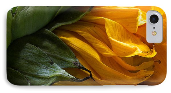 Sunflower 5 IPhone Case by Mary Bedy