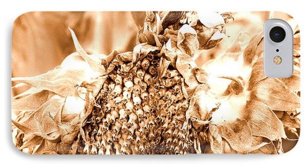 IPhone Case featuring the photograph Sunflower - After Summer Has Gone by Janine Riley