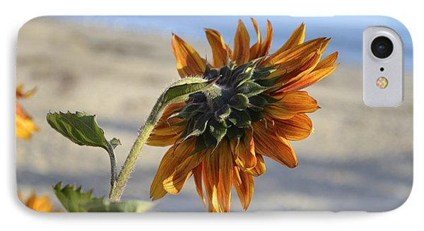 Sunflower IPhone Case by Alex King