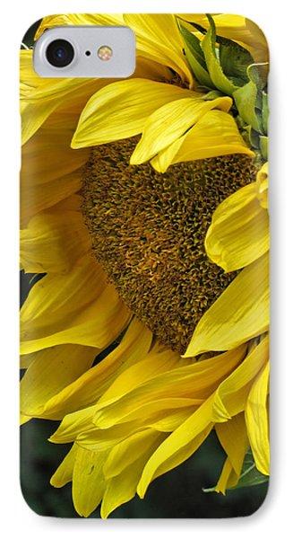 Sunflower  IPhone Case by Ann Bridges