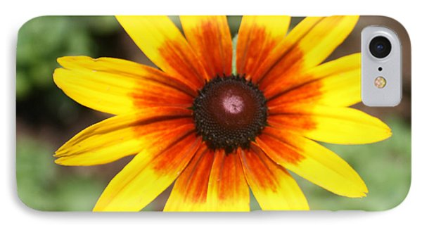 Sunflower At Full Bloom  Phone Case by John Telfer