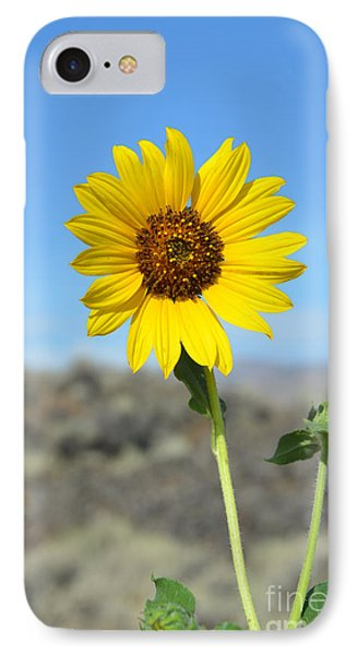 Sunflower By Craters Of The Moon IPhone Case by Debra Thompson
