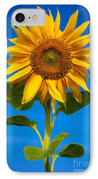 Sunflower Phone Case by Carsten Reisinger