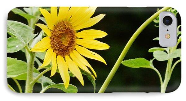 Sunflower Cheer IPhone Case by VLee Watson
