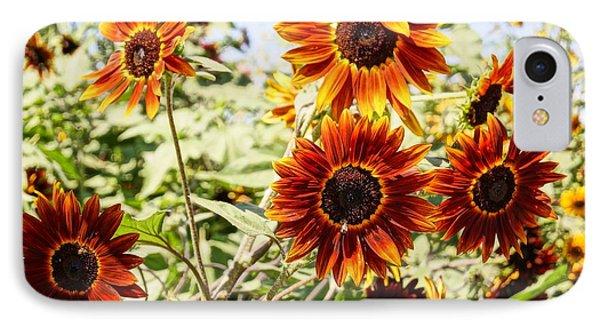 Sunflower Cluster Phone Case by Kerri Mortenson