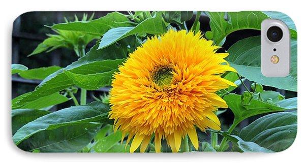 Sunflower Drama IPhone Case by Teresa Schomig