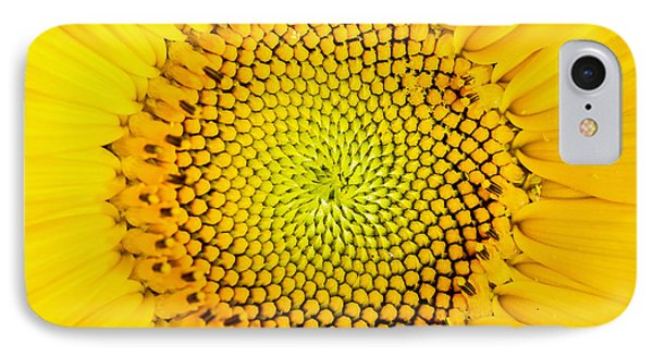 Sunflower  IPhone Case by Edward Fielding