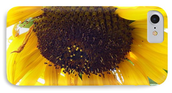 IPhone Case featuring the photograph Sunflower - Falling For You by Janine Riley