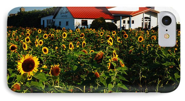 Sunflower Field At Winery IPhone Case by James Kirkikis