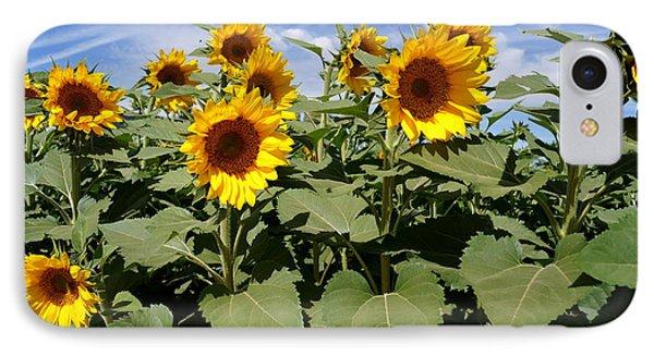 Sunflower Field Phone Case by Kerri Mortenson